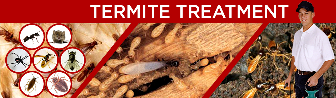 Termites Treatment 1